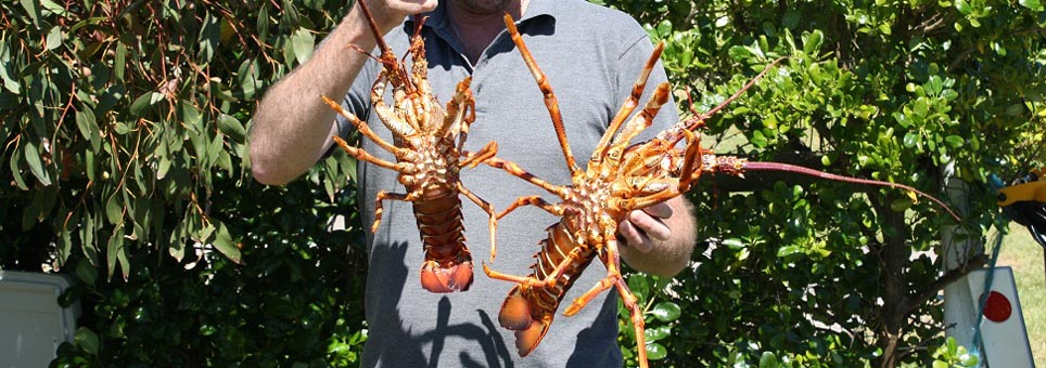 Famous Rock Lobsters